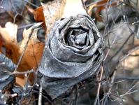 Dry leaf rose