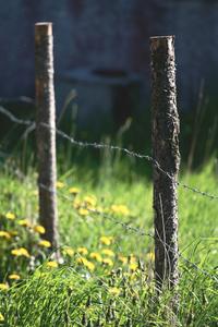 Fence Posts 3