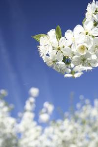 Blue Spring 2