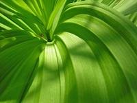 green world 2