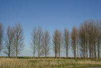 landschape