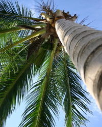 Palm Tree Perspecitve