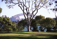 Sydney harbor 3