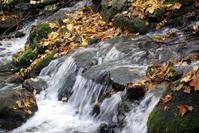 autumn, brook