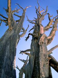 scary trees