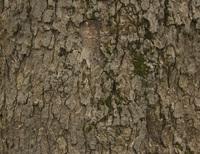 Tree crust 2