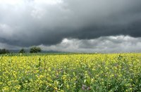 bright fields - dark skies 3