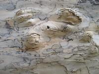 wood's texture