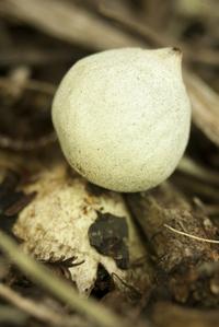 Fungi 7