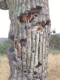 cactus in Nevada