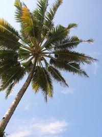 Krapyak Beach