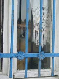 dog behind the window