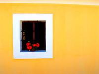Vivid Window