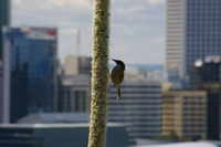 city bird 2