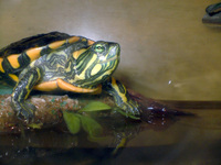 zeta, the turtle 4