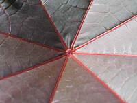 Centar of leaf