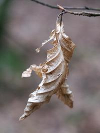 Autumn_ 1