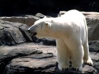 Seneca Park Zoo- Rochester, NY