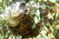 hornets' nest 2