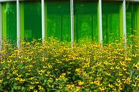 Green glass yellow flowers