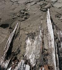 Beach Textures 2
