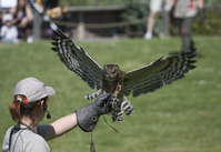 Owl in zoo