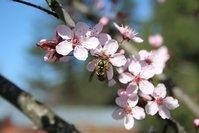 Spring Pollinator 2