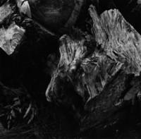 Wood and Stumps