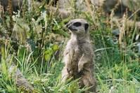 Meerkat Patrol 4