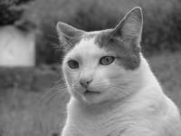 Model Cat 1