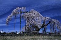 Landscape,Flower,Sakura,Tree,Mountain,Clear,Sky,Spring