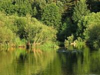 River Life 1