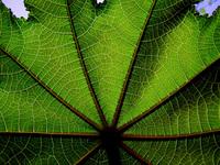 leaf texture40