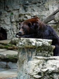 Bored Bear 2