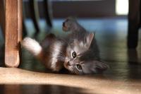 Cat story 7