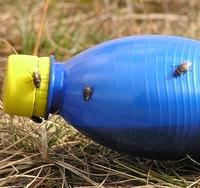 Flies on a bottle
