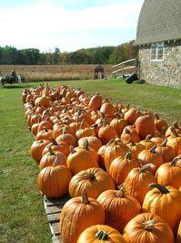 Pumpkin Farm 4