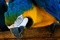Curious Bird! 3