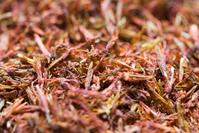 Saffron (Kasubha)