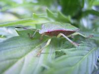 bug macroshot