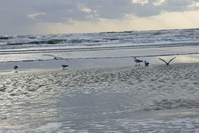 Seashore Holland 2009