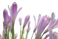 Vivid Purple Flowers