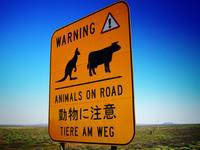 roadsign Animals on road in Australia