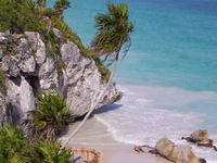 Sea Breeze meets Beach Palm