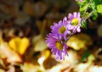 AutumnFlower