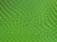 green grid 1