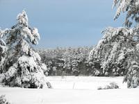 Polish winter 16