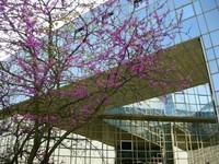 When modern building meets flowers