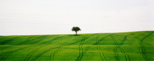 tuscany landscape 4