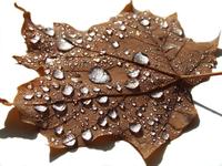 Jeweled Leaf